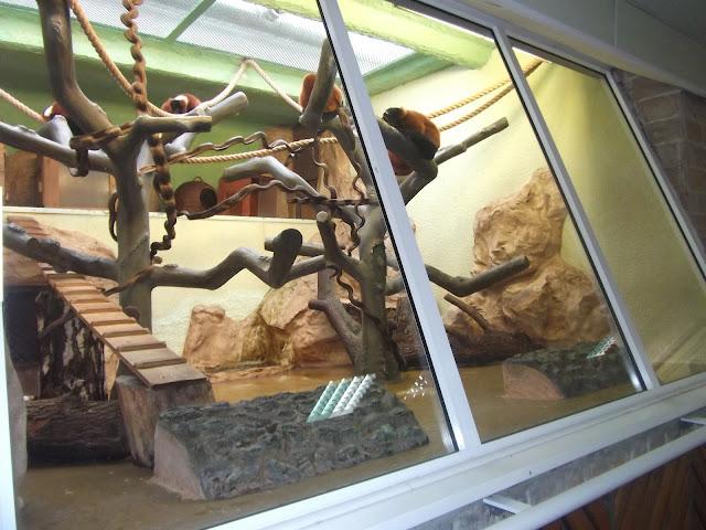 Wnętrze małpiarni