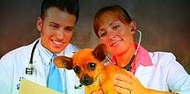 Curso veterinária