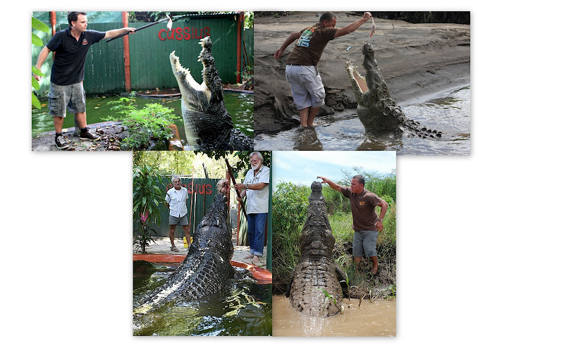Questões e Fatos sobre Crocodilianos gigantes: Transferência de debate da comunidade Conflitos Selvagens.  - Página 2 Propor%25C3%25A7%25C3%25A3o%2520Cassius%2520e%2520Tyson