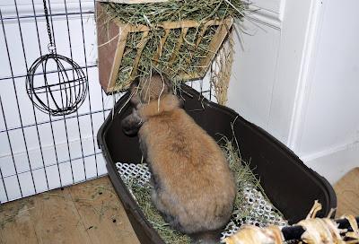 Своими руками лоток кролику
