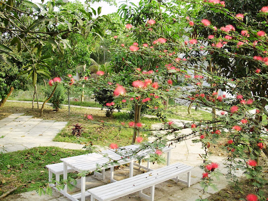 Salna Orchard