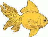 guldfisk.jpg?gl=DK