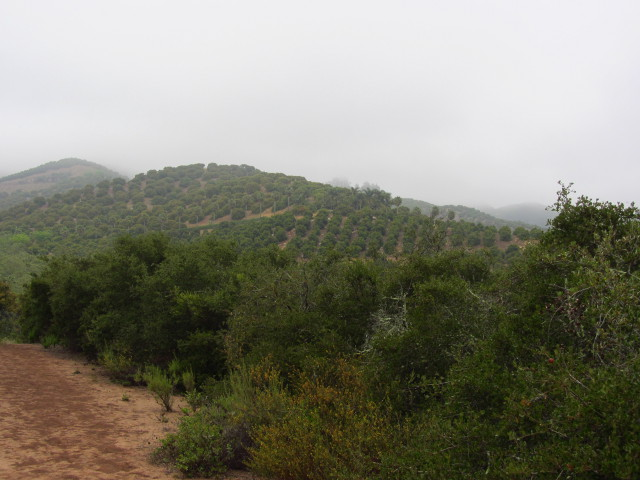 lines of trees in an orchard
