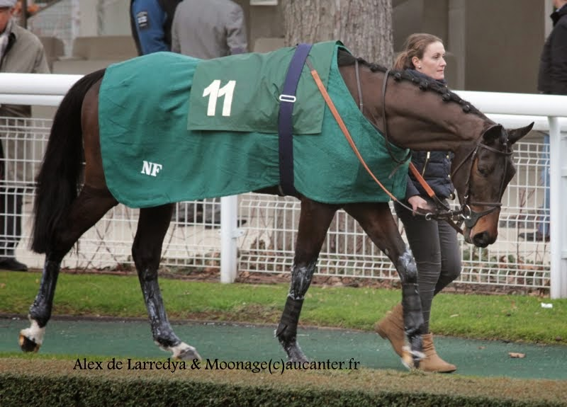 Photos Auteuil 1-03-2015 IMG_7162