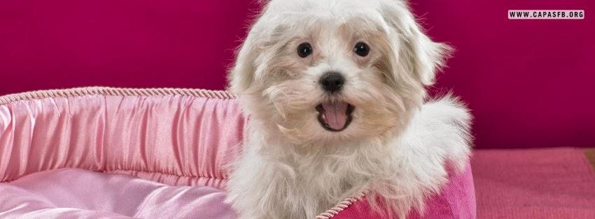Capas para Facebook Cachorro