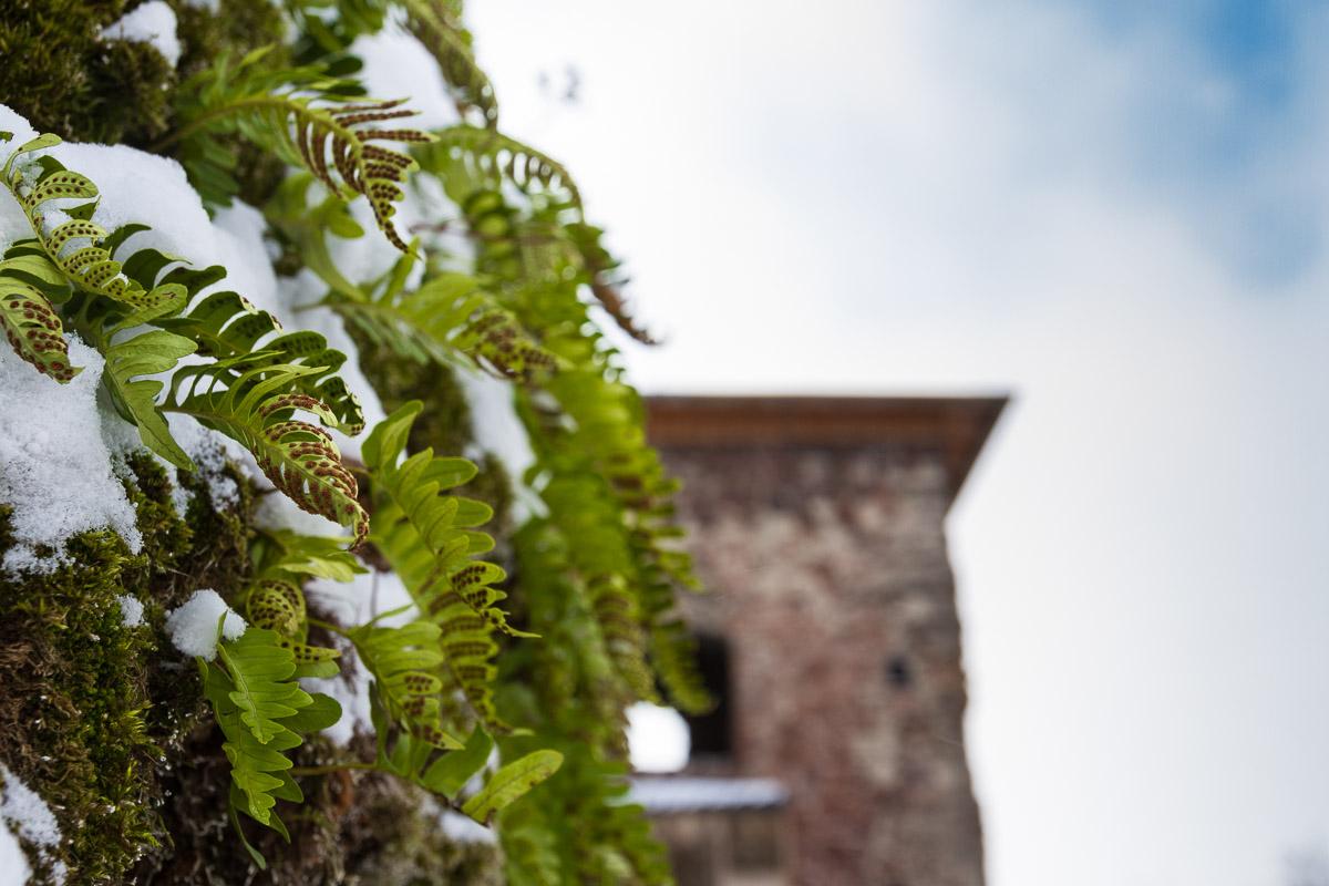 auf der Burgruine Hohnstein, Südharz