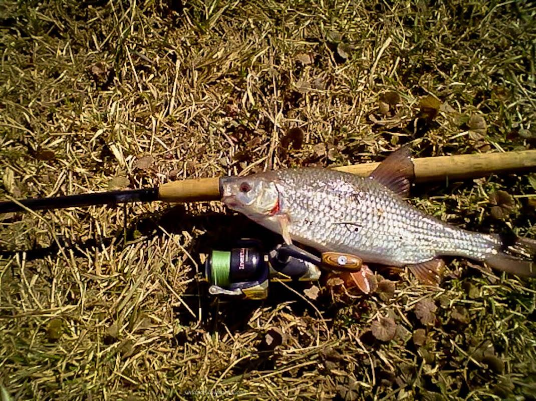 отчет о рыбалке машково