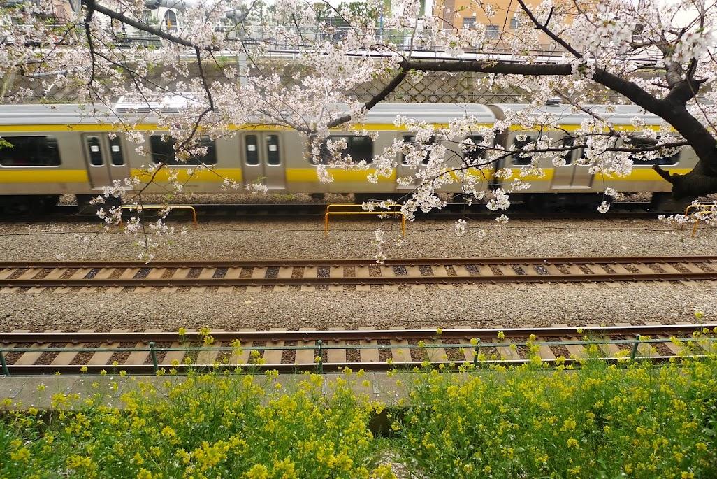 higashi nakano sakura