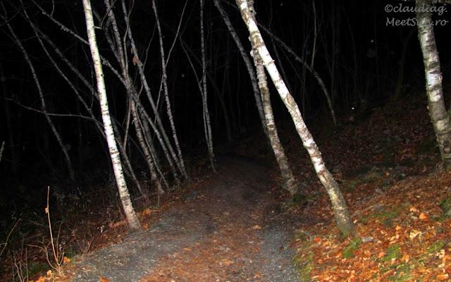 noaptea prin padurea de mesteceni