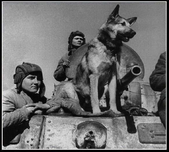 Интересные факты о собаках. Часть 2