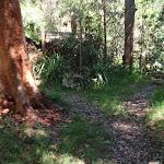 Red bark gum tree near falls (136141)