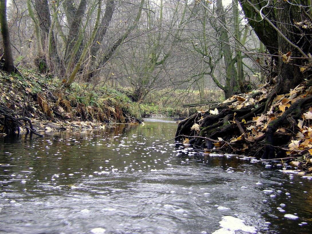 rzeka, Pisia
