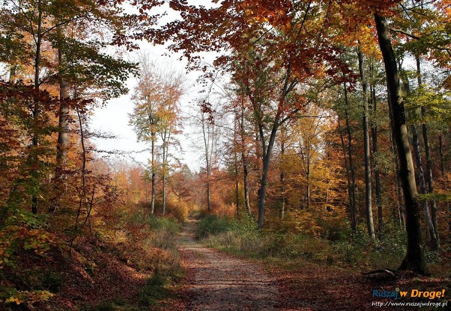 Kalwaria Wejherowska - szlak nordic walking