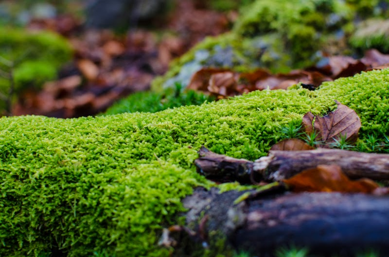 Covorul naturii