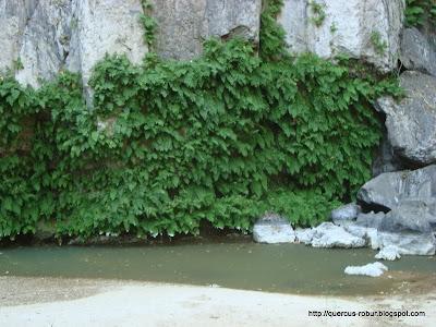 Base de la cascada de ~ 80 metros en Huaxtla