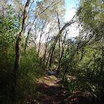 Continuing through the bush (134341)