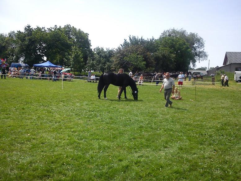przegląd koni