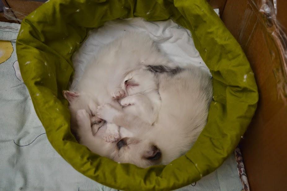 Nukkumistauko