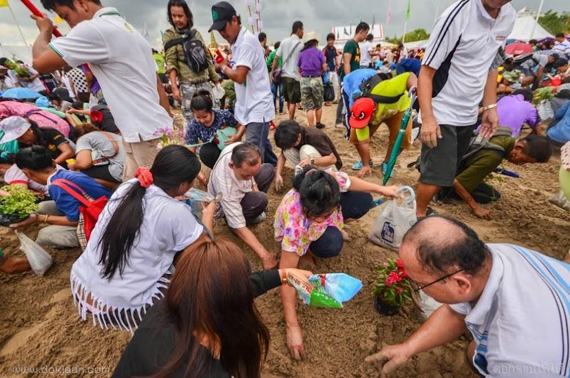 พระราชพิธีพืชมงคลจรดพระนังคัลแรกนาขวัญ 2558