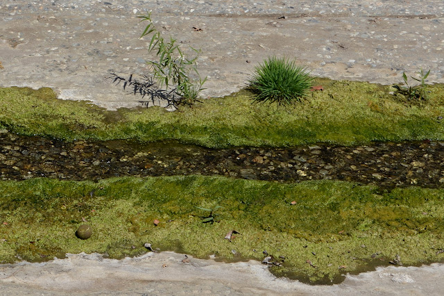 green grass, small plants, and a tennis ball in the middle of the concrete ditch