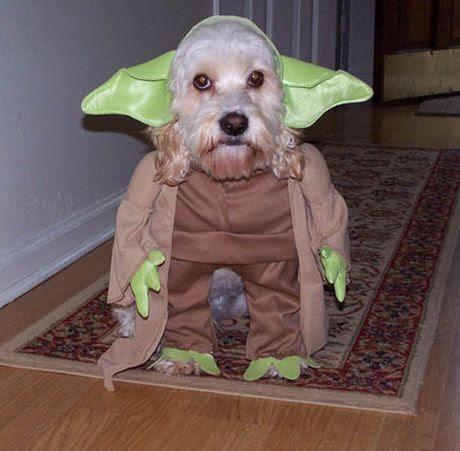 yoda-dog.jpg.jpeg