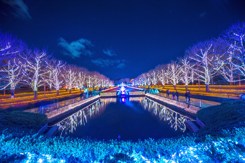 昭和記念公園 Winter Vista Illumination 写真6