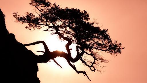 Gnarled Tree, Matia Island, San Juan Islands, Washington.jpg