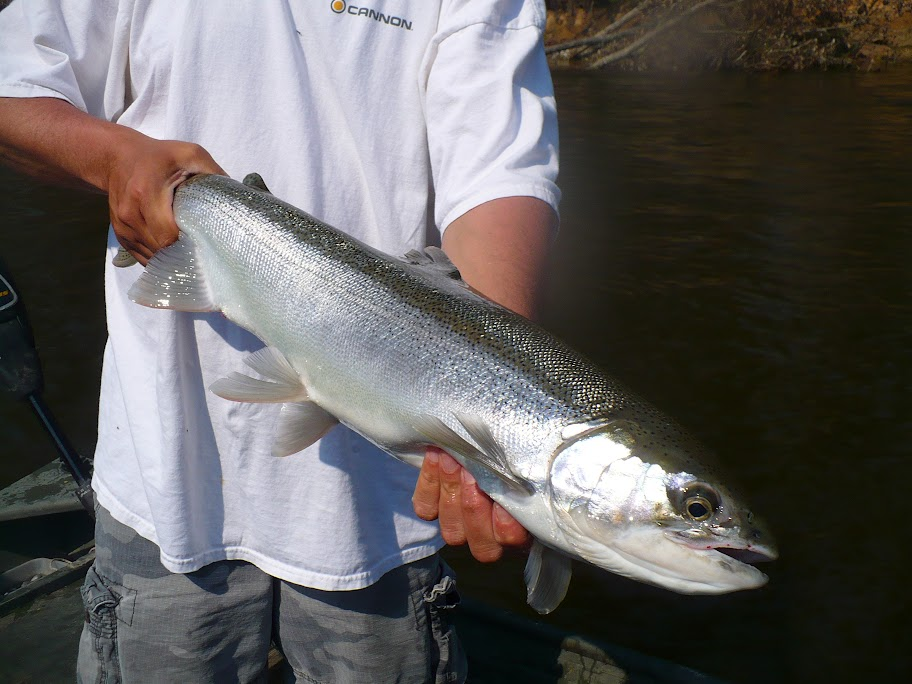 Muskegon River Steelhead Guided Fishing Trips