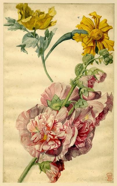 Jan van Huysum - Flower study