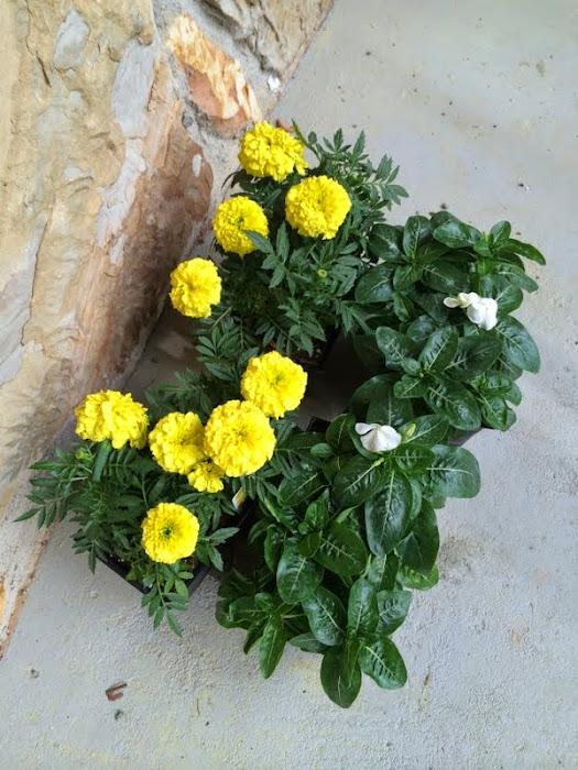 mailbox flowers