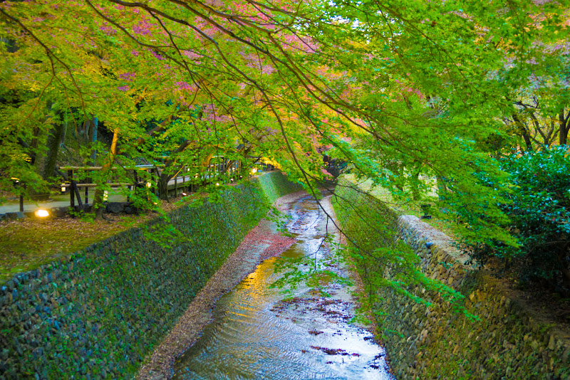 京都 紅葉 北野天満宮 写真4
