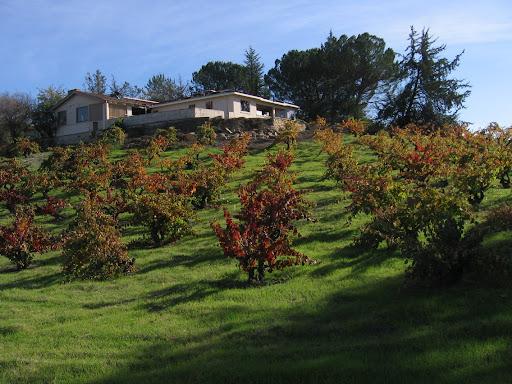turley vineyard