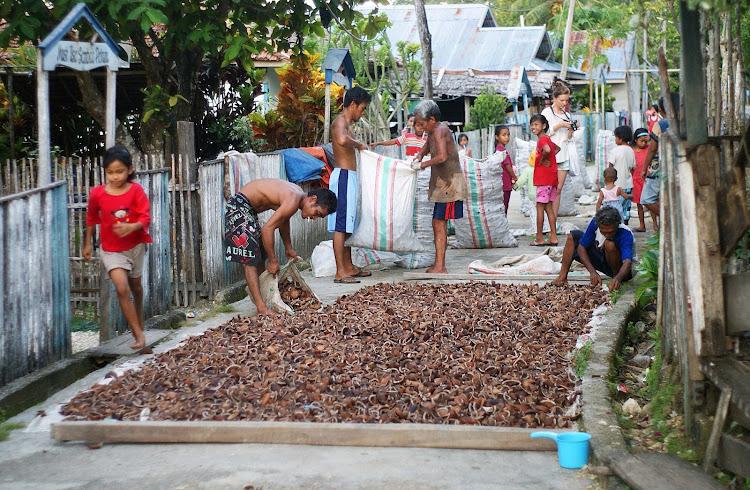 Обработка кокосов для изготовления масла в Индонезии