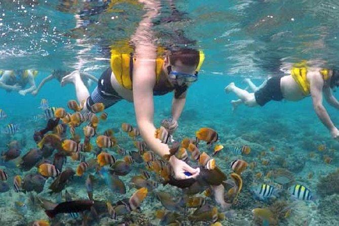 Snorkeling Tour in gili meno island