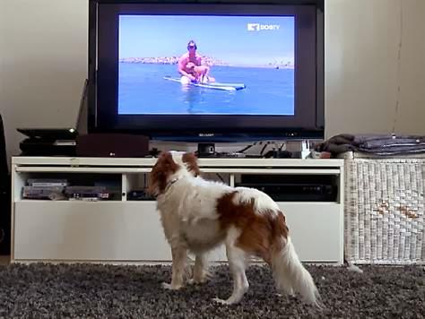 television para perros