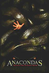 Rắn Khổng Lồ Nam Mỹ 2: Săn Lùng Phong Lan Máu - Anacondas: The Hunt For The Blood Orchid - Anaconda 2 poster