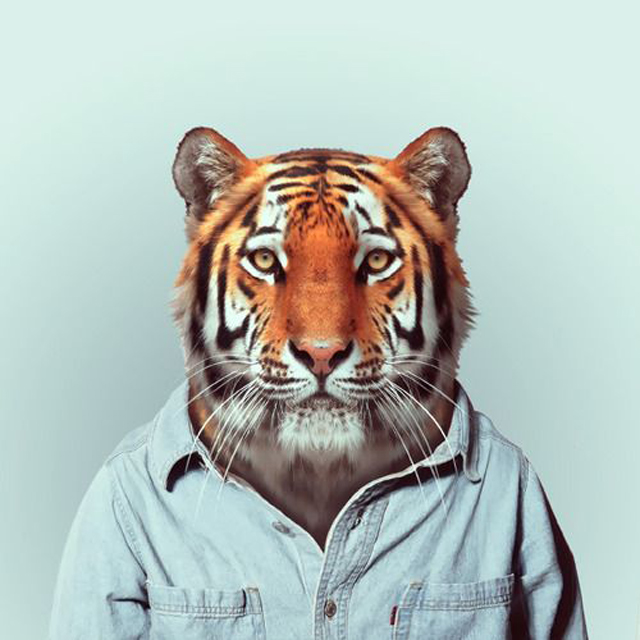 *Zoo Portraits動物時尚秀:正經八百時裝篇! 16