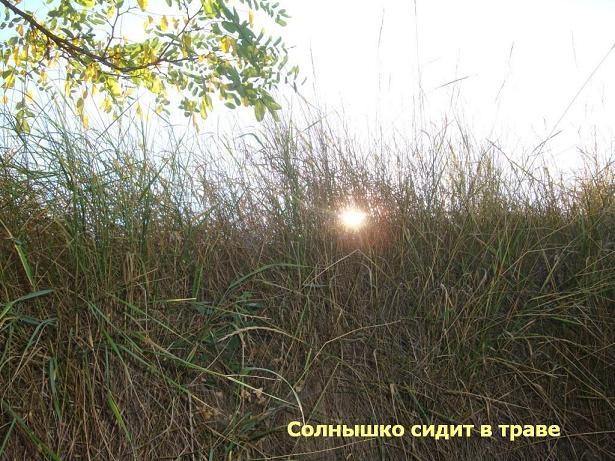 небо солнце трава