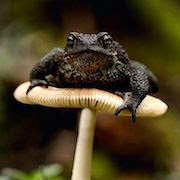 К чему снится огромная лягушка?