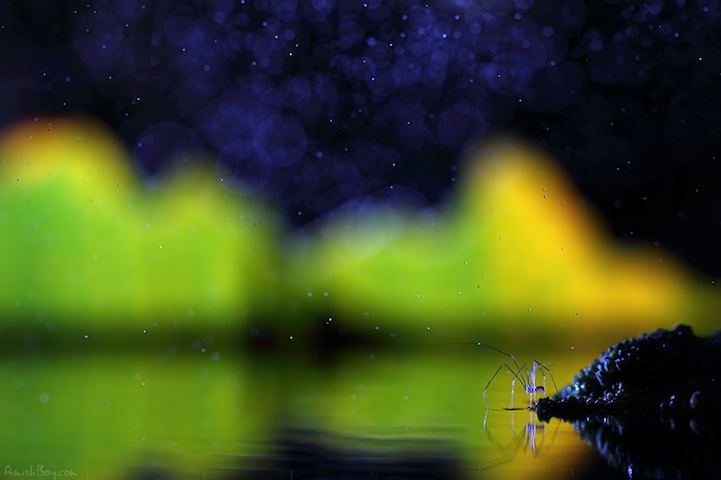 NadavBagim11 Disney Inspired Magical Photos Of Insects