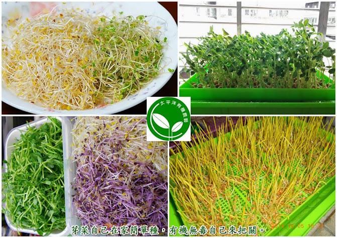 有機豌豆苗、有機苜蓿芽苗、有機紫高麗菜苗、有機小麥草(貓草)、有機黑芝麻芽菜苗