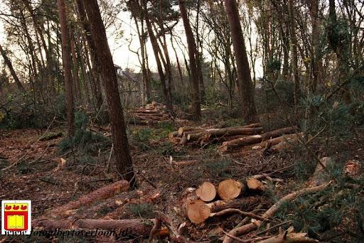 houtoogst pritter Overloon 25-11-2012 (12).JPG