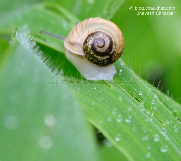 Another Snail on Grass