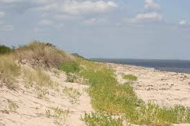 Image result for sand dunes beach