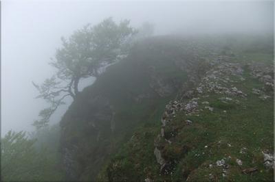 Bonitas siluetas entre la niebla