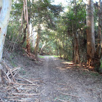 Shady section among the tall gums (168005)