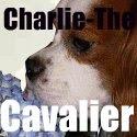 Charlie-The-Cavalier