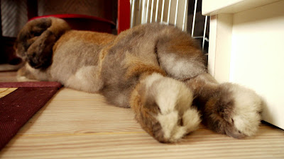 Кролику спокойно и безопасно