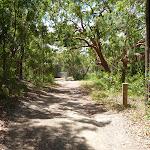 Trail on the Wallarah Pennisula Walk near Murray's Beach (389060)