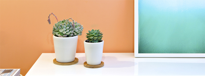 Wellness Wednesday: How to make pure air stylish- indoor plants
